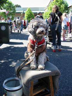 Benjamin The Dog - Camberwell Markets, Melbourne