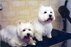 Dog Grooming School Brisbane, and Mandurah