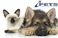 Pet Transport Services Australia Wide