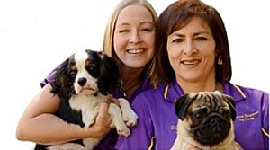 Dog minders groomers dog care sydney melbourne and brisbane find dog trainers in brisbane solutioingenieria Gallery