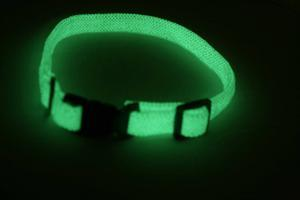 Glow in the dark dog collars
