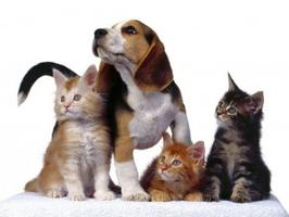 Small animal naturopathy - online courses
