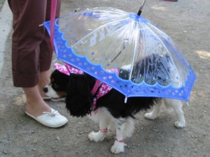 Does my umbrella match my hat? Dog Fashion Show